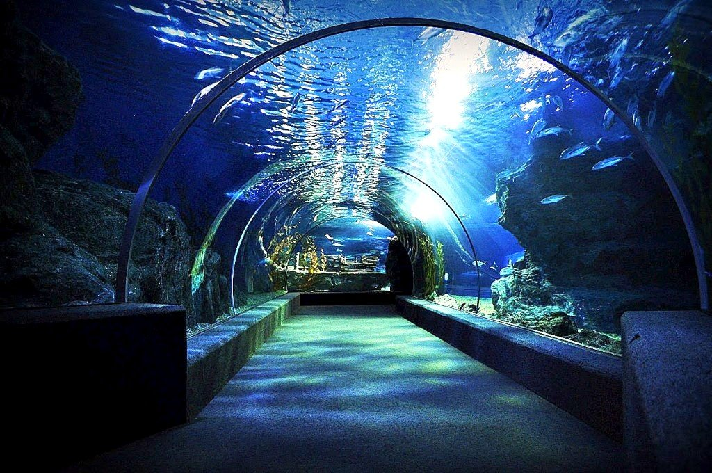 Siam Ocean World i Bangkok